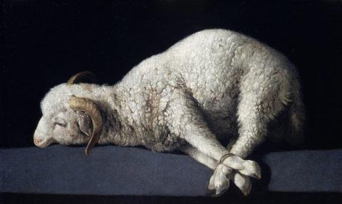 Agnus Dei de Francisco de Zurbarán musée du Prado Madrid